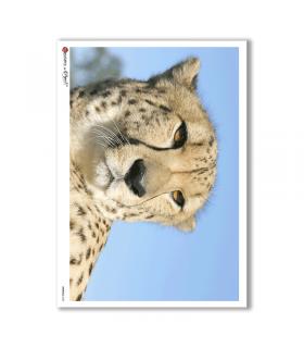 ANIMALS-0023. Papel de Arroz animales para decoupage.
