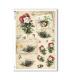 FLOWERS_0334. Papel de Arroz victoriano flores para decoupage.