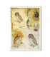 ANIMALS-0133. Carta di riso animali per decoupage.