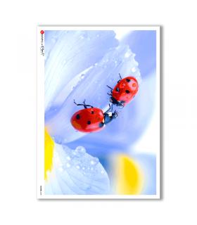 FLOWERS-0020. Papel de Arroz flores para decoupage.