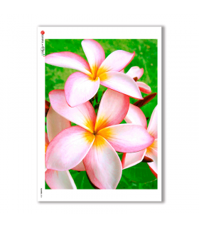 FLOWERS-0024. Carta di riso fiori per decoupage.